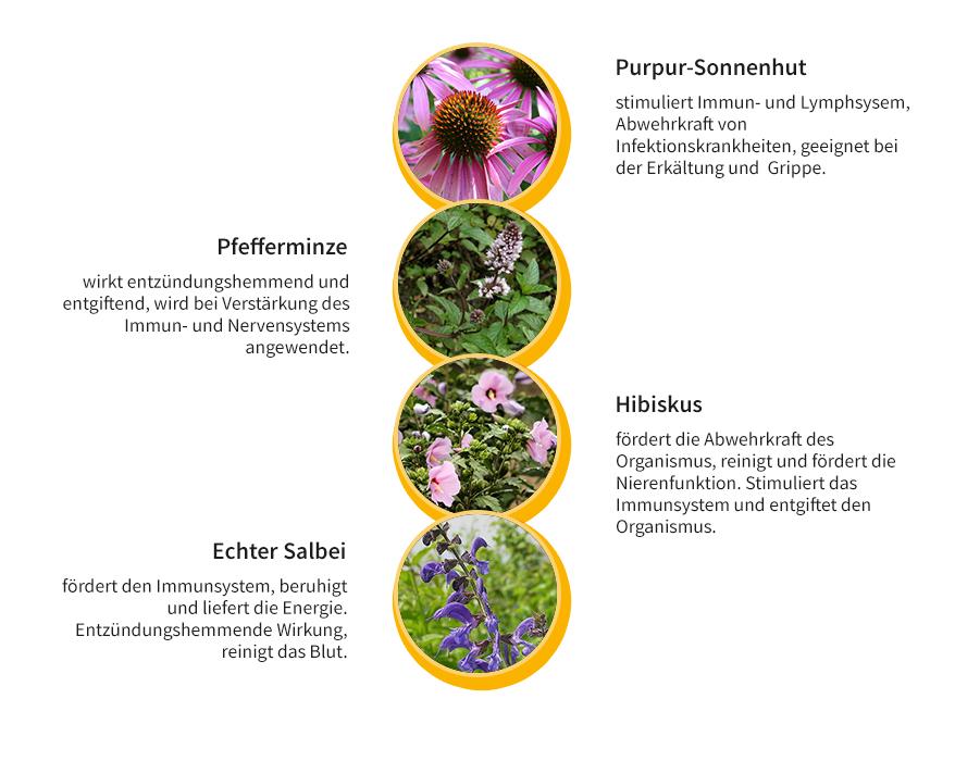 Niedlich Lymphsystem Und Immunität Zeitgenössisch - Anatomie und ...